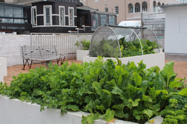 Permaculture Cape Town