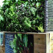 Organic produce at Chardonnay Deli